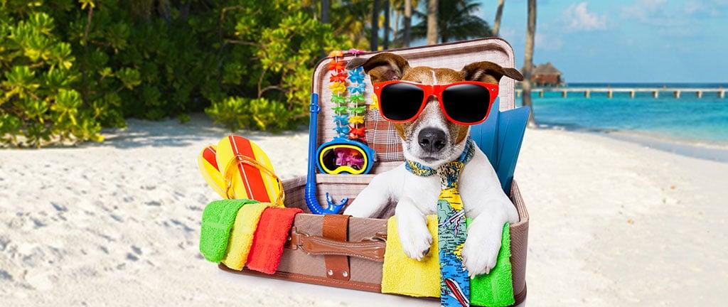 Como levar seus animais de estimação para o exterior?